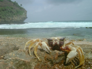 13. monster pantai timang